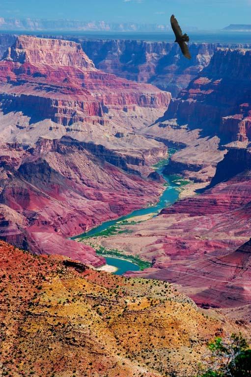 Grand Canyon Eagle